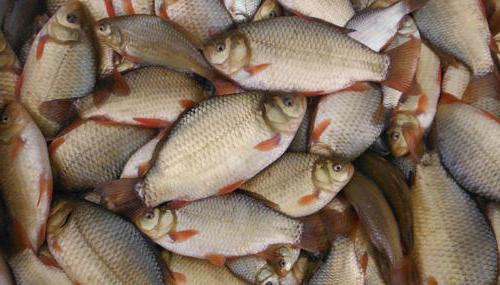 mjesto pronalaska većih ribamjesto za pronalazak zatvorenih stranica