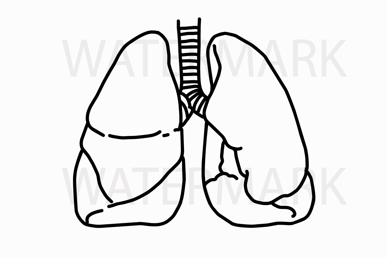 Outline Lungs