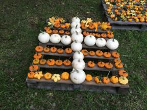 small cross at pumpkin patch