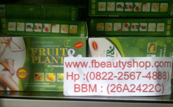 Fruit Plant Asli