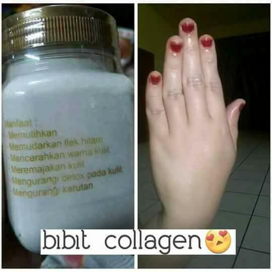 bibit collagen original cv mecca 3