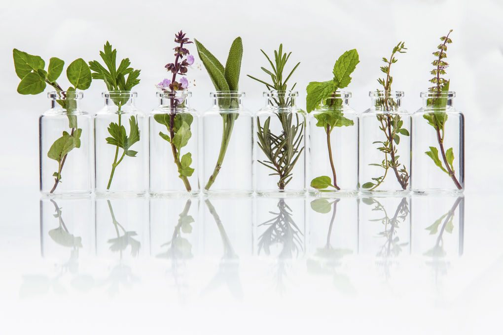 F Biotech - Enzymes and plant extracts