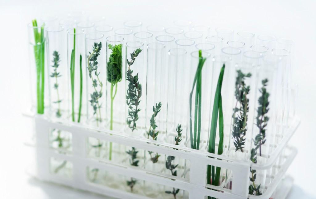 phytogenics for human nutrition - F. Biotech