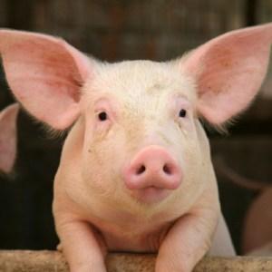 F. Biotech - animal nutrition