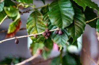 181106-145401-beans-1D8A4474