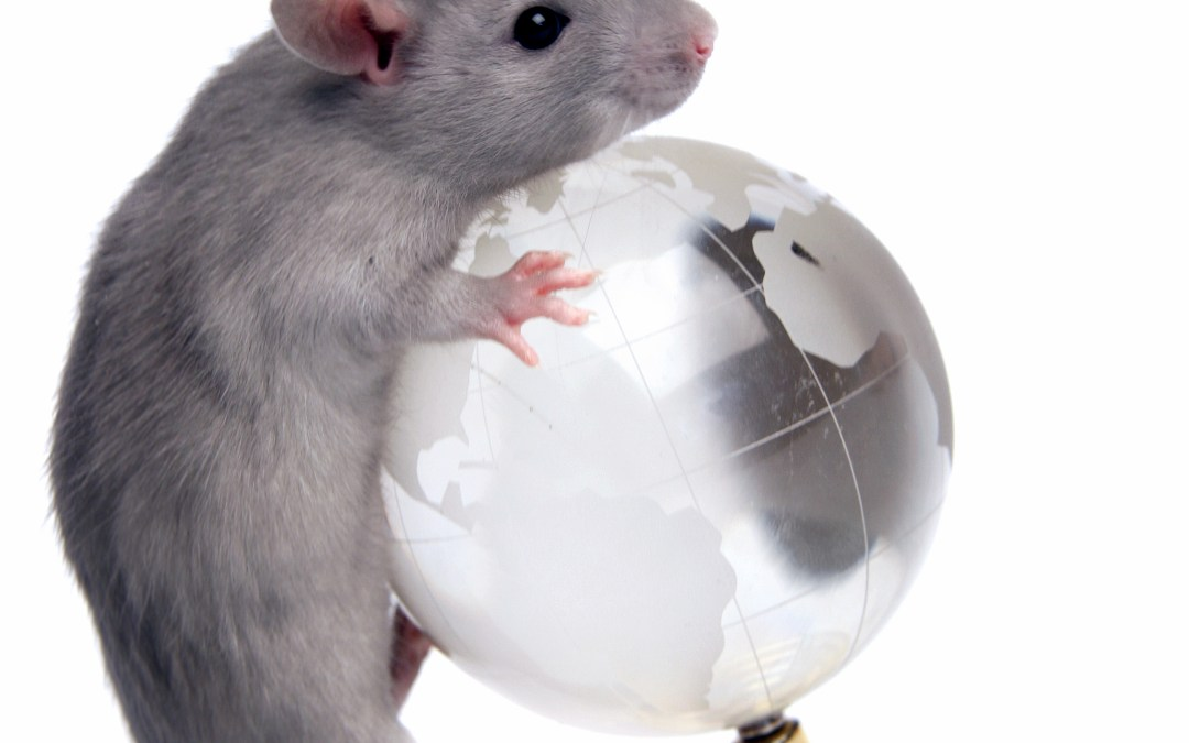 Animals in Research; Saving the World