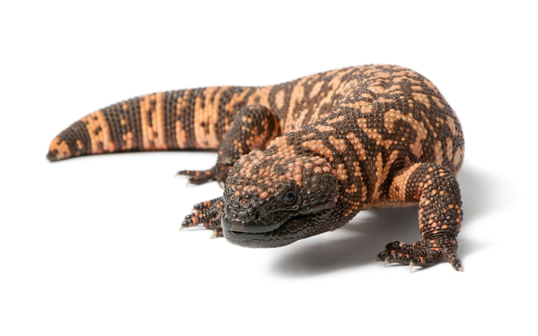 Gila monsters: clues into new drug development?