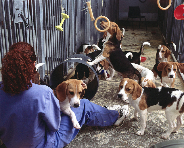 Retiring Beagles from Research