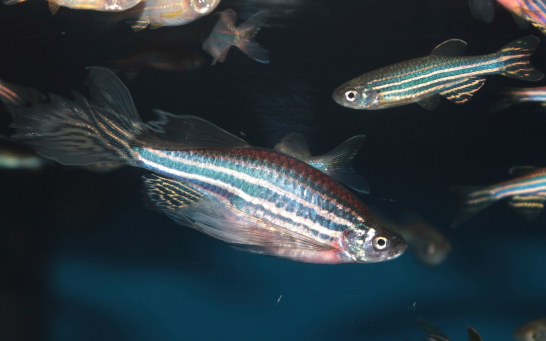 Zebrafish and Vitamin E deficiency: Unlocking Alzheimer's clues?