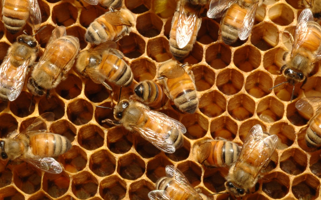 Saving the bees may involve understanding camouflage