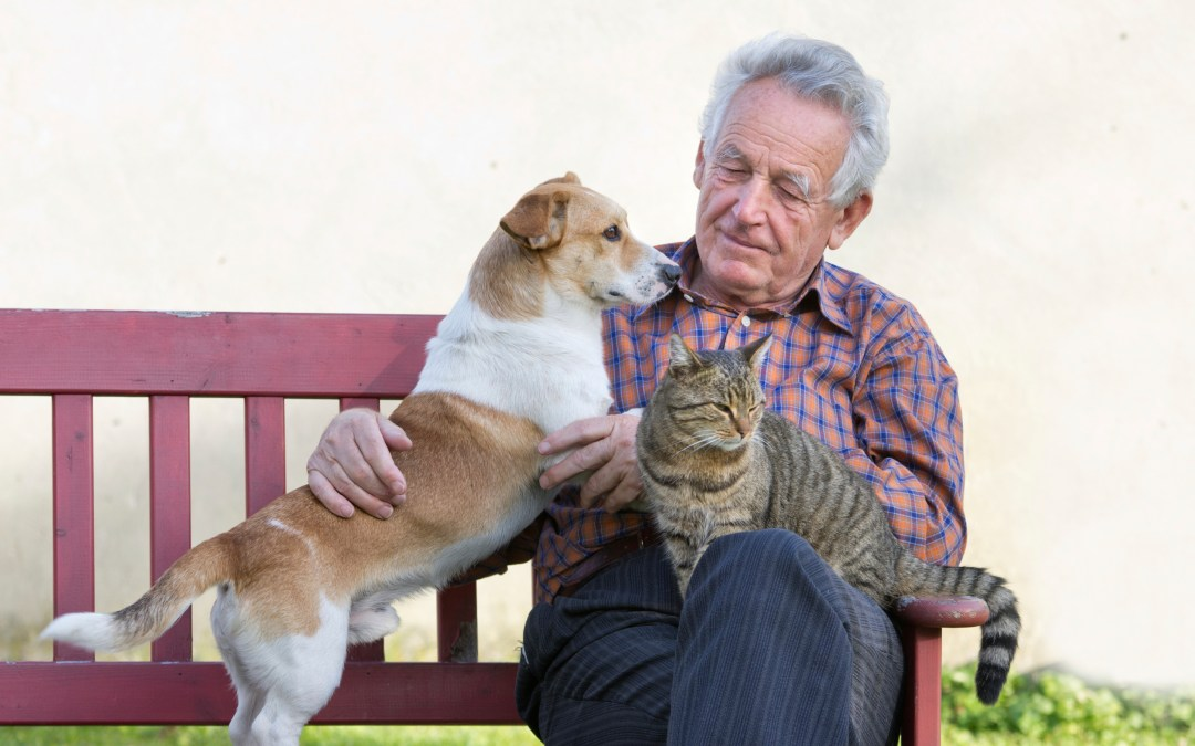 Canine and feline Alzheimer's: What we can learn from each other