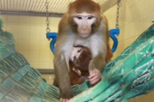 Photo Credit: Wisconsin National Primate Research Center/University of Wisconsin-Madison