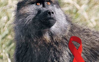With monkeys, researchers make progress in the search for a vaccine against HIV