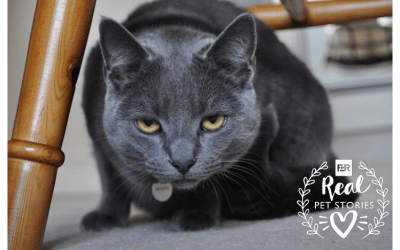 Izzy's Story: The Cat Who Was Allergic to Everything