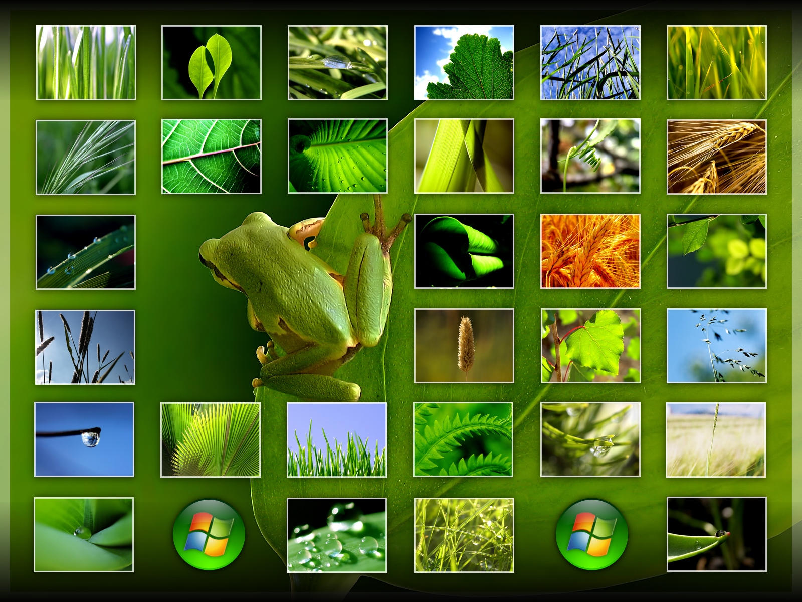 green_Wallpapers
