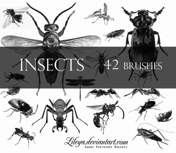 Insect Photoshop Brushes