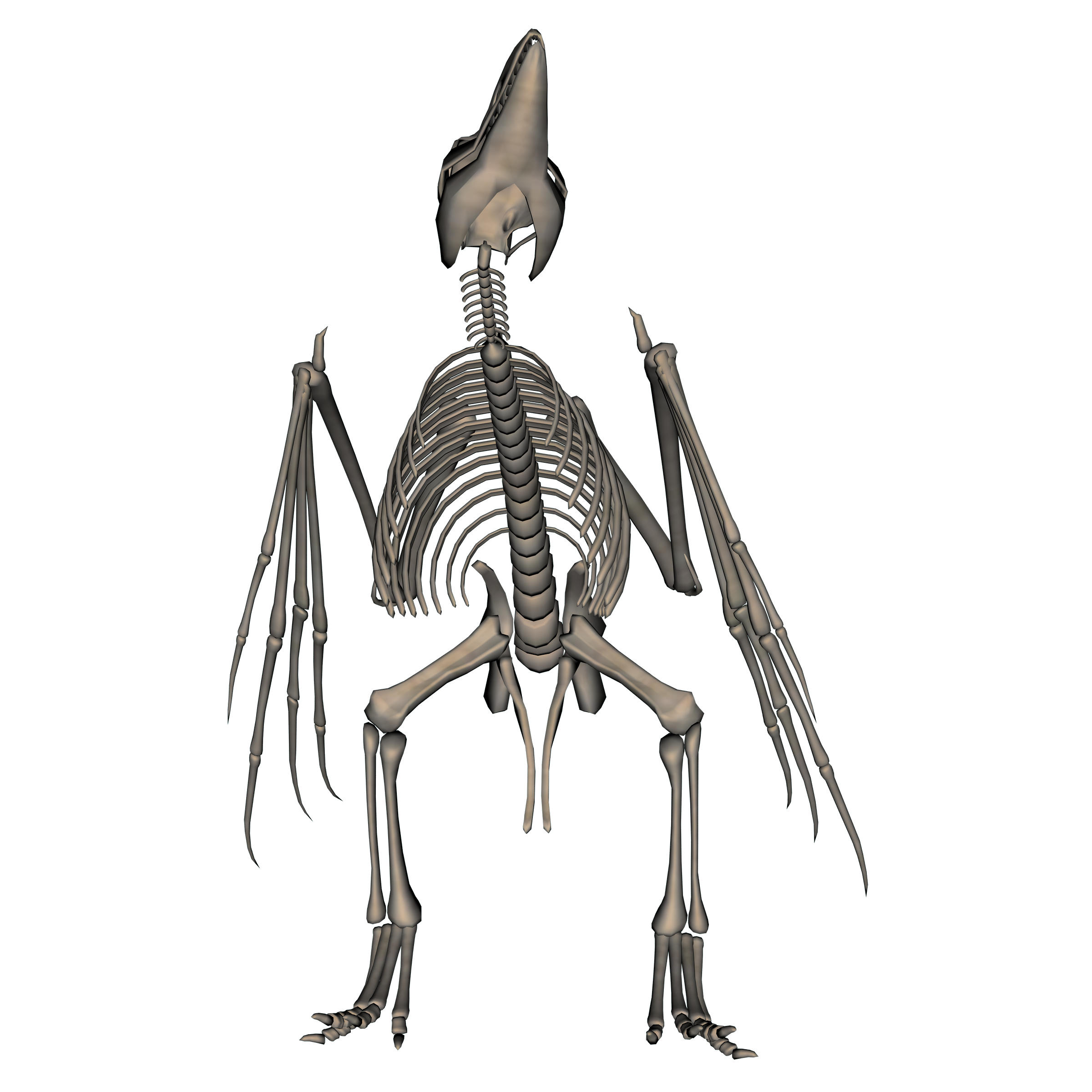 Bird Skeleton By Markopolio Stock On Deviantart