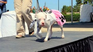 Friends of CCAS Paw-Ject Runway