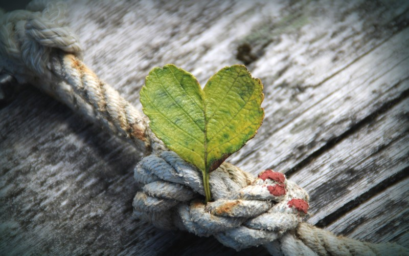 A green leaf in the shape of a heart sits in the middle of a worn gray and red rope knot against a weathered gray wooden surface.