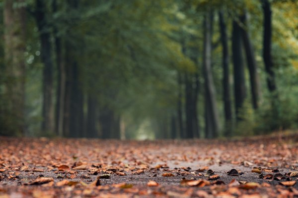 Brown fallen leaves cover a dirt path. The path runs into the distance between two rows of green leafy trees. The leaves in the immediate foreground are the clearest. Image by Melk Hagelslag from Pixabay.