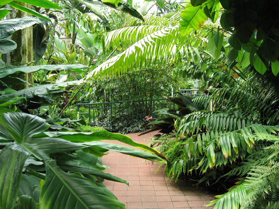 Pathway Lined With Tropical Plants