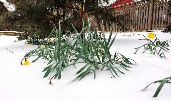 Happy Spring! (Photo: Charles Hansen)