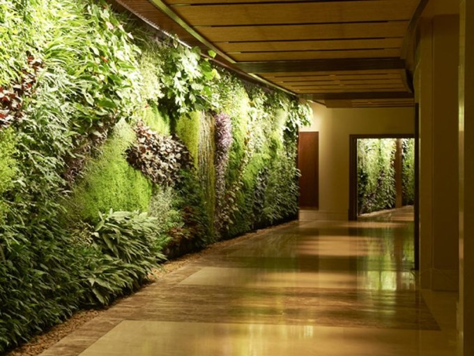 This green wall is filled with 170 types of plants from France.