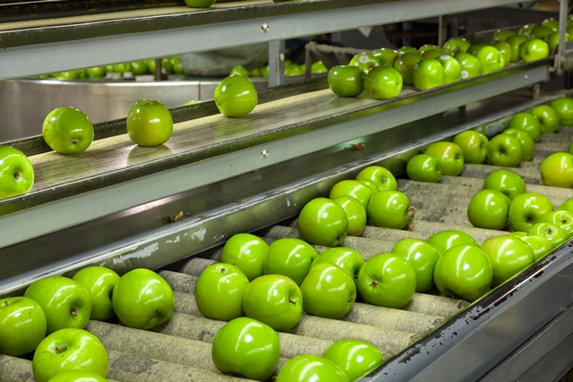 T&G Global mulls sale of fruit processing business