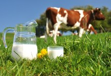 Valio slash soy use in bid for more eco-friendly milk