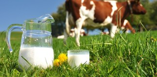 Arla Foods unveils new farming standards model for UK