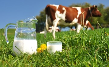 Arla Foods unveils new farming standards model for UK