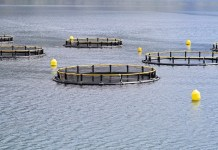 Report highlights potential of insects for Scottish fish farms