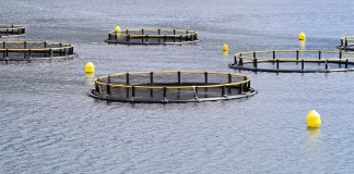 Cargill opens Indonesian aquaculture innovation centre