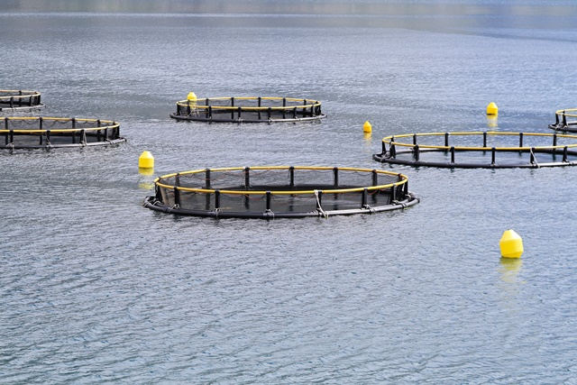 £5.1m investment to fund aquaculture research & innovation