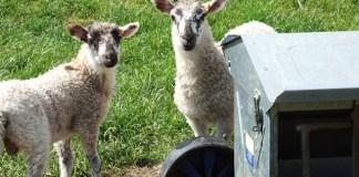 Food giants join animal welfare coalition