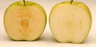 Non-browning apples set for US supermarket shelves