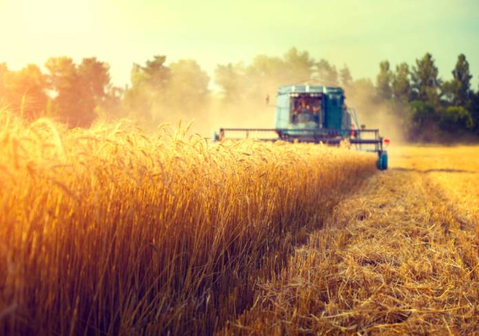 Extreme weather and geopolitics impacting food production