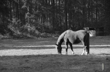 Paard zwart-wit