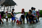 Youth participants plant mangrove trees in Cebu, Philippines