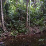 Masturbation Monday No. 154 — Jungle