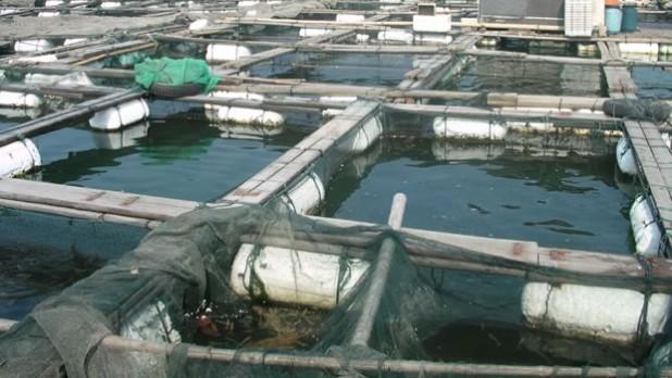 fish farm U.S. Imports Fish From China Raised on Human and Animal Waste