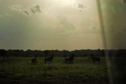 Murchison Falls National Park, June 2010