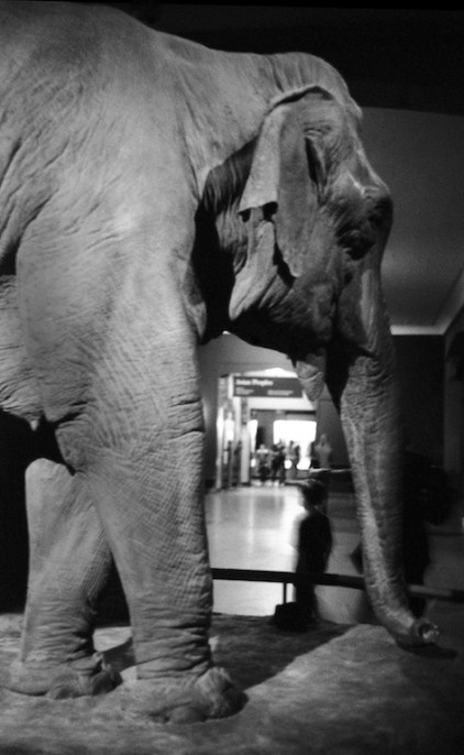 American Museum of Natural History, April 2010