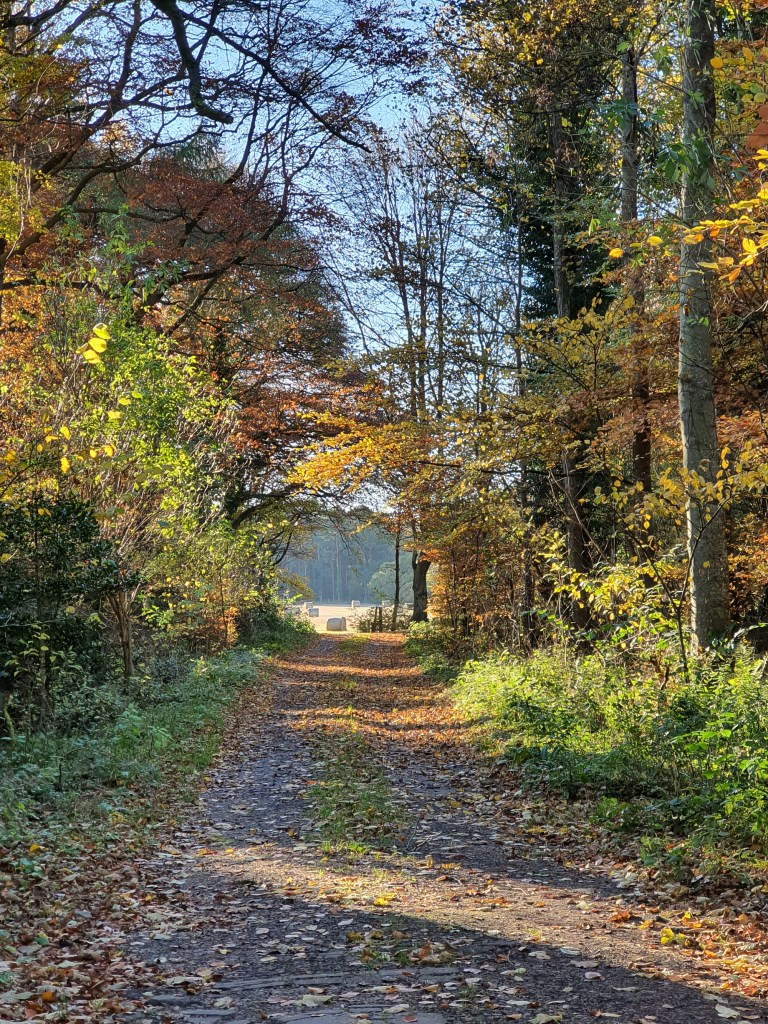 Brightly lit forest path in autumn.
