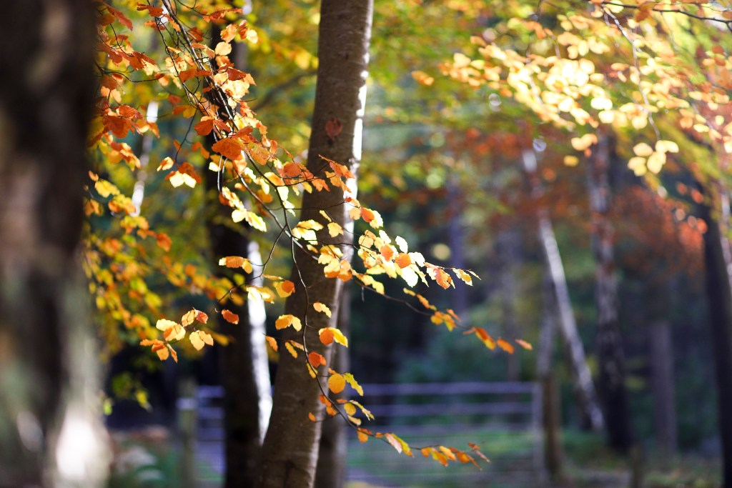 Sunlight filtering through the bright leaves.