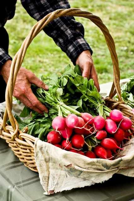 Tolstoy Farm Radishes - A easy recipe for Grilled Radishes with Sweet Onions, Green beans and a simple Tarragon Vinaigrette, a delicious easy Spring recipe| www.feastingathome.com