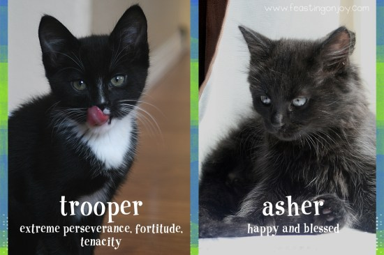 Asher and Trooper New Kittens