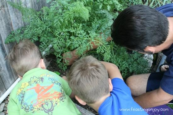 Boys Picking carrots