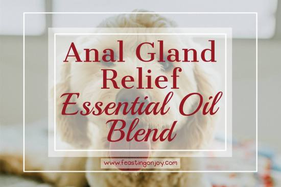 Anal Gland Relief Essential Oil Blend 1 | Feasting On Joy
