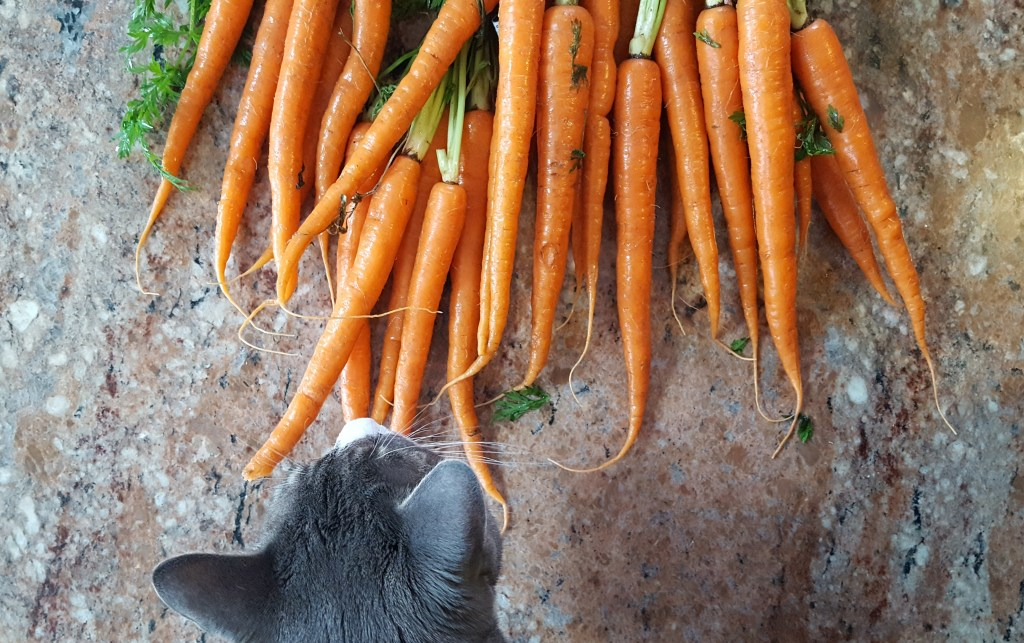 Carrots and a Cat | Feast In Thyme
